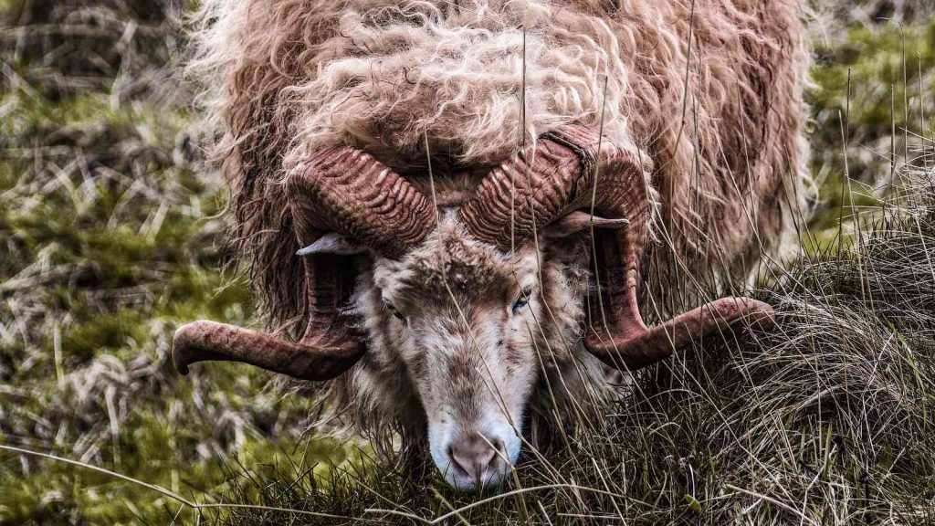 The ram's substitutionary atonement for Isaac